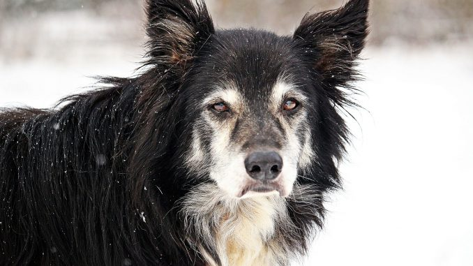Can Old Dogs Learn New Habits?